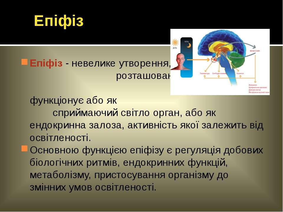 Епіфіз - невелике утворення, розташоване у глибині мозку; функціонує або як с...