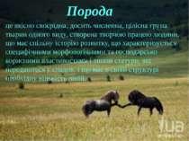 це якісно своєрідна, досить численна, цілісна група тварин одного виду, створ...