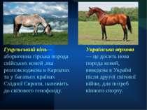 Гуцульський кінь— аборигенна гірська порода свійських коней ,яка розповсюджен...