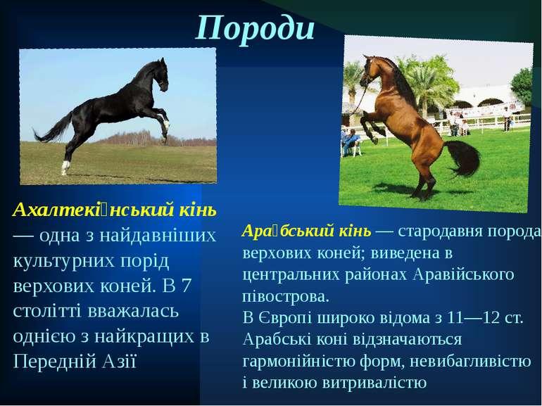 Породи Ахалтекі нський кінь — одна з найдавніших культурних порід верхових ко...