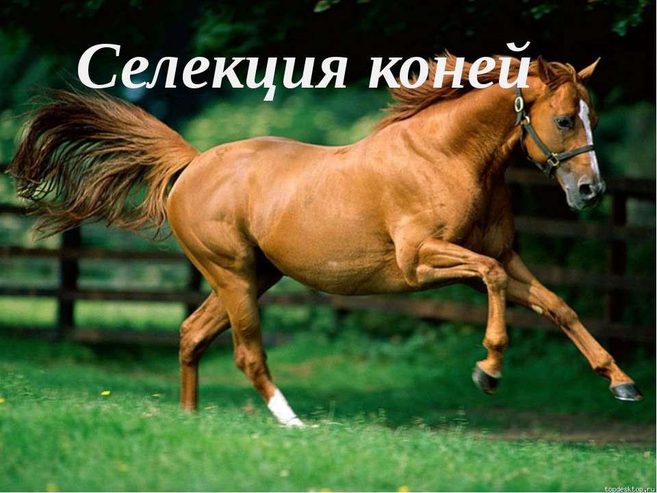 Селекция коней