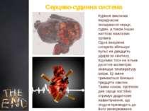 Куріння викликає передчасне зношування серця, судин, а також інших життєво ва...