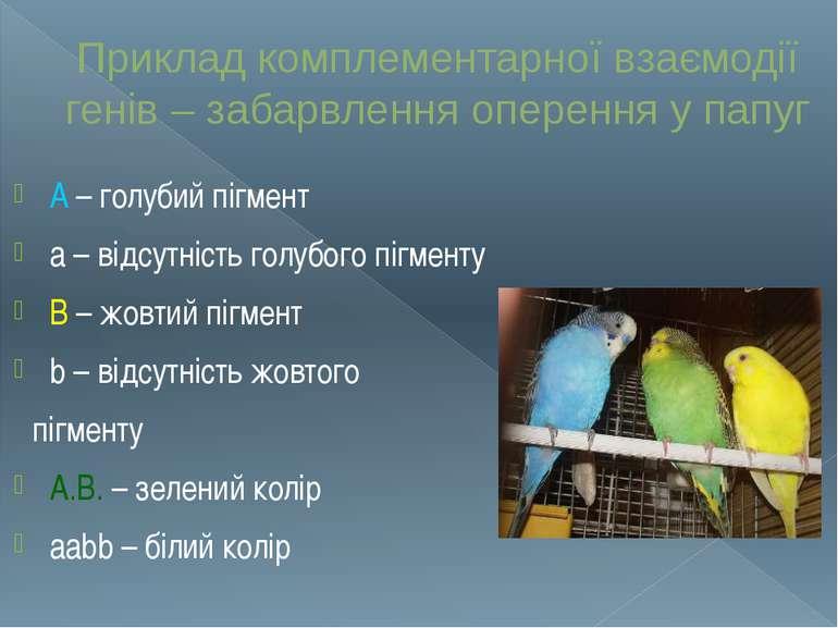 Приклад комплементарної взаємодії генів – забарвлення оперення у папуг A – го...