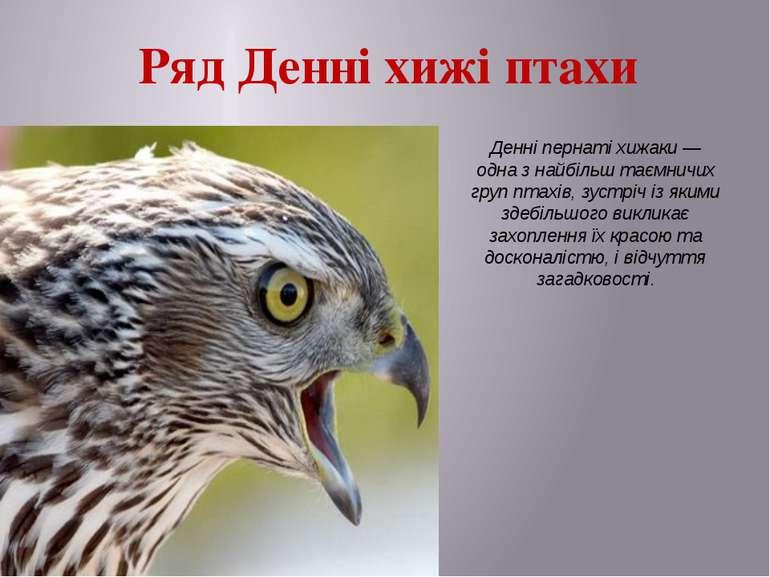 Ряд Денні хижі птахи Денні пернаті хижаки — одна з найбільш таємничих груп пт...