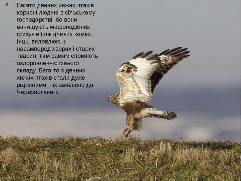 Багато денних хижих птахів корисні людині в сільському господарстві, бо вони ...