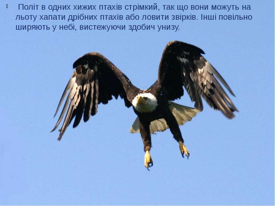 Політ в одних хижих птахів стрімкий, так що вони можуть на льоту хапати дріб...