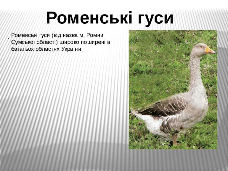 . Роменські гуси Роменські гуси (від назва м. Ромни Сумської області) широко ...