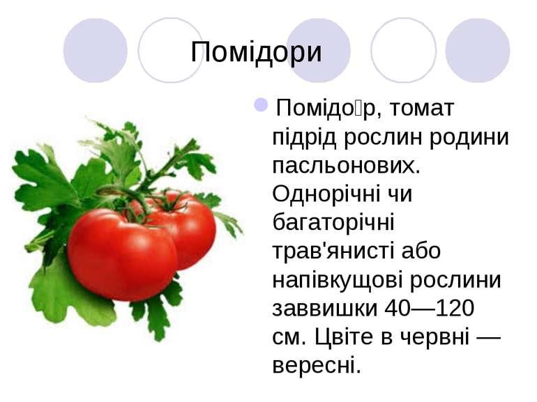 Помідори Помідо р, томат підрід рослин родини пасльонових. Однорічні чи багат...