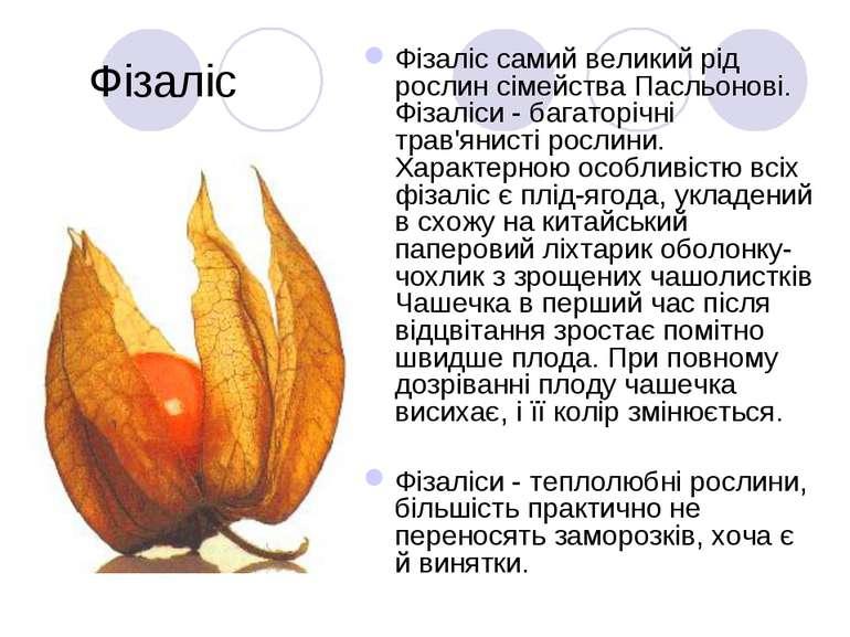 Фізаліс Фізаліс самий великий рід рослин сімейства Пасльонові. Фізаліси - баг...