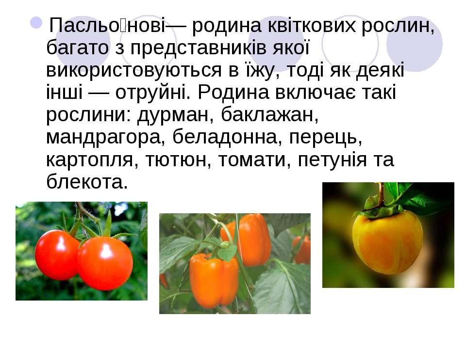 Пасльо нові— родина квіткових рослин, багато з представників якої використову...