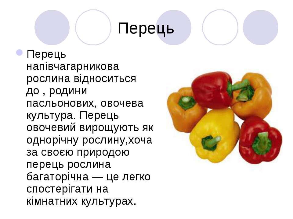 Перець Перець напівчагарникова рослина відноситься до , родини пасльонових, о...