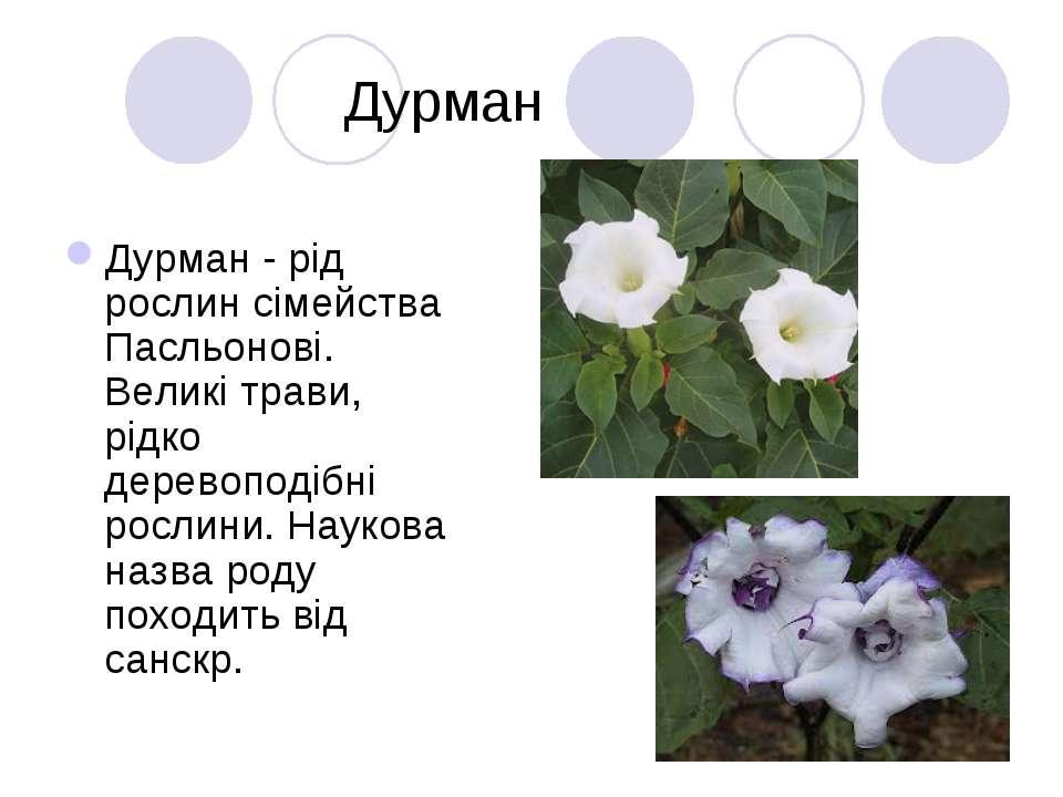 Дурман Дурман - рід рослин сімейства Пасльонові. Великі трави, рідко деревопо...