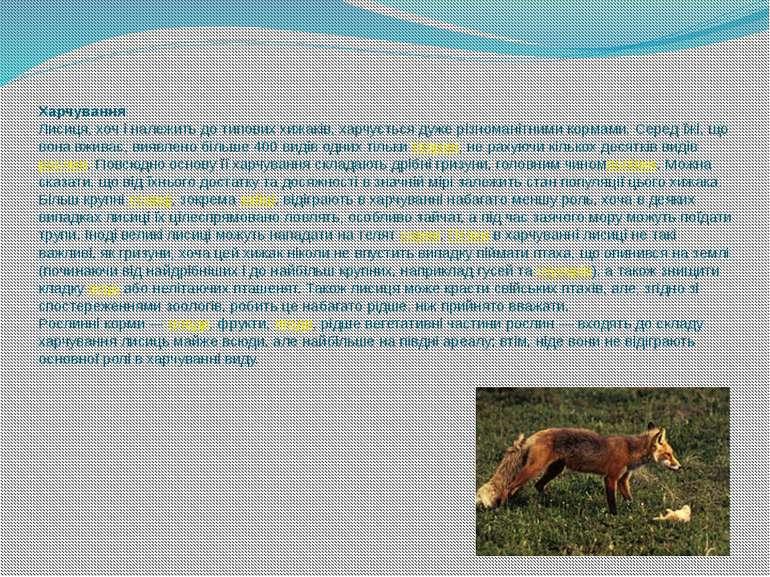 Харчування Лисиця, хоч і належить до типових хижаків, харчується дуже різнома...