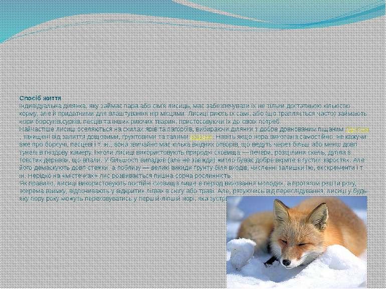 Спосіб життя Індивідуальна ділянка, яку займає пара або сім'я лисиць, має заб...