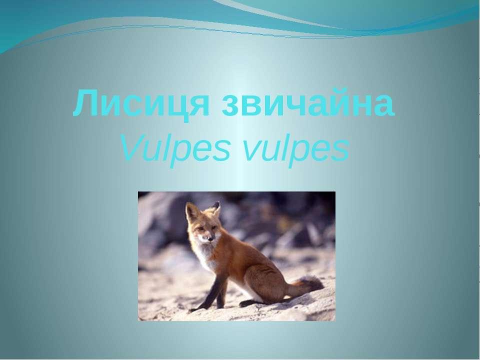 Лисиця звичайна Vulpes vulpes