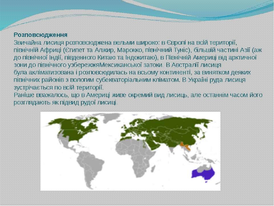 Розповсюдження Звичайна лисиця розповсюджена вельми широко: вЄвропіна всій ...