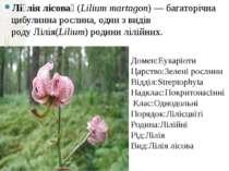 Лі лія лісова (Lilium martagon)— багаторічна цибулинна рослина, один з виді...