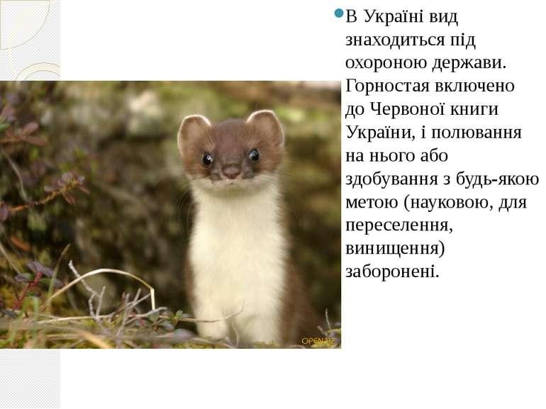 В Україні вид знаходиться під охороною держави. Горностая включено доЧервоно...
