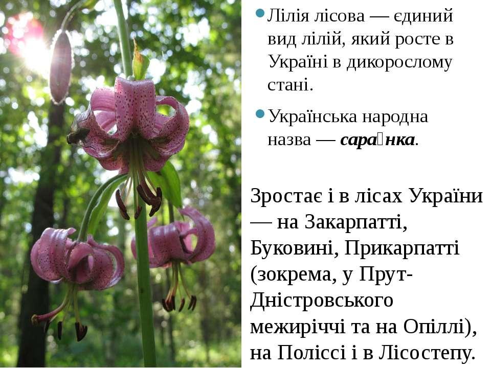 Лілія лісова— єдиний видлілій, який росте в Українів дикорослому стані. Ук...