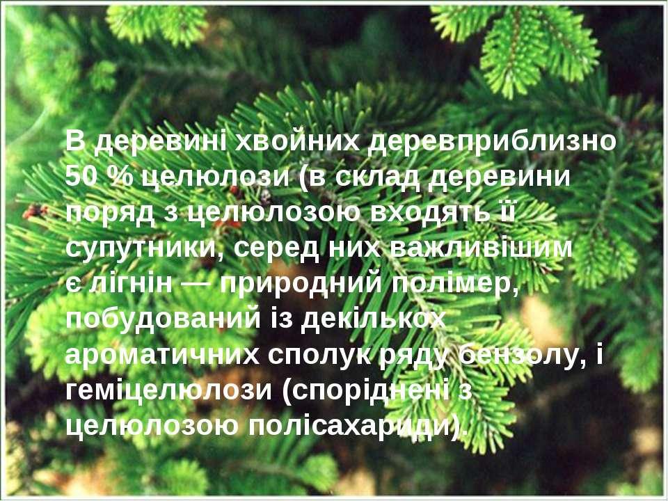 Вдеревині хвойних деревприблизно 50% целюлози (в склад деревини поряд з це...