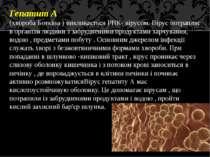 Гепатит А (хвороба Боткіна ) викликається РНК- вірусом. Вірус потрапляє в орг...