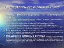Регуляція діяльності ендокринних залоз Нервова (імпульсно-медіаторна) чи пара...