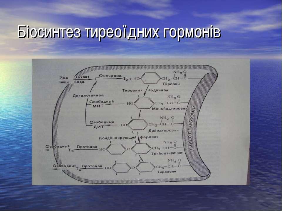 Біосинтез тиреоїдних гормонів