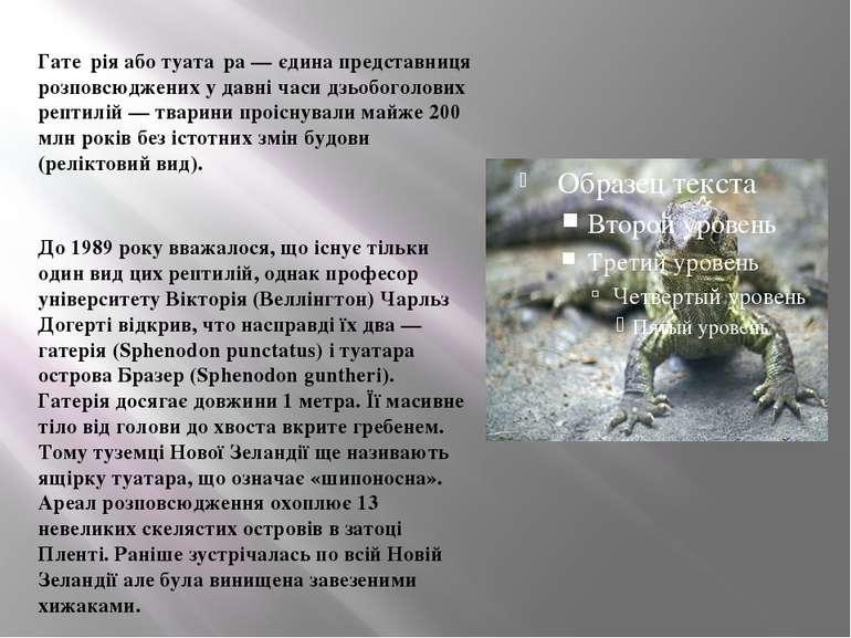 Гате рія або туата ра — єдина представниця розповсюджених у давні часи дзьобо...