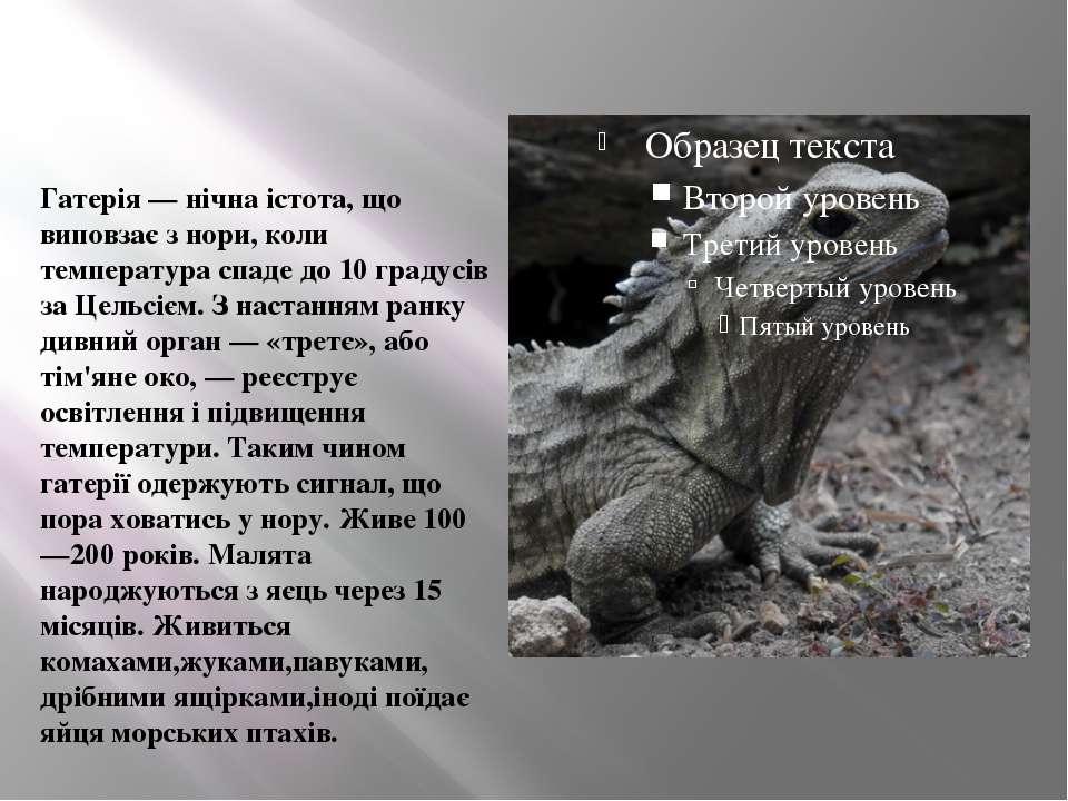 Гатерія — нічна істота, що виповзає з нори, коли температура спаде до 10 град...