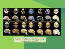Черепа гомінідів, від шимпанзе (A) до людини розумної (N).