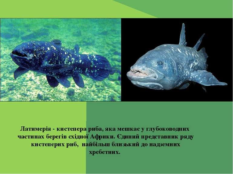 Латимерія - кистепера риба, яка мешкає у глубоководних частинах берегів східн...