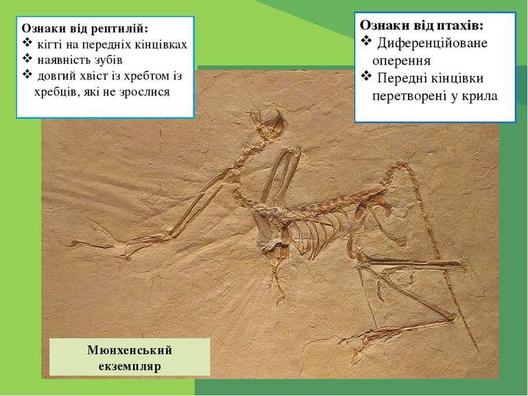 Ознаки від рептилій: кігті на передніх кінцівках наявність зубів довгий хвіст...