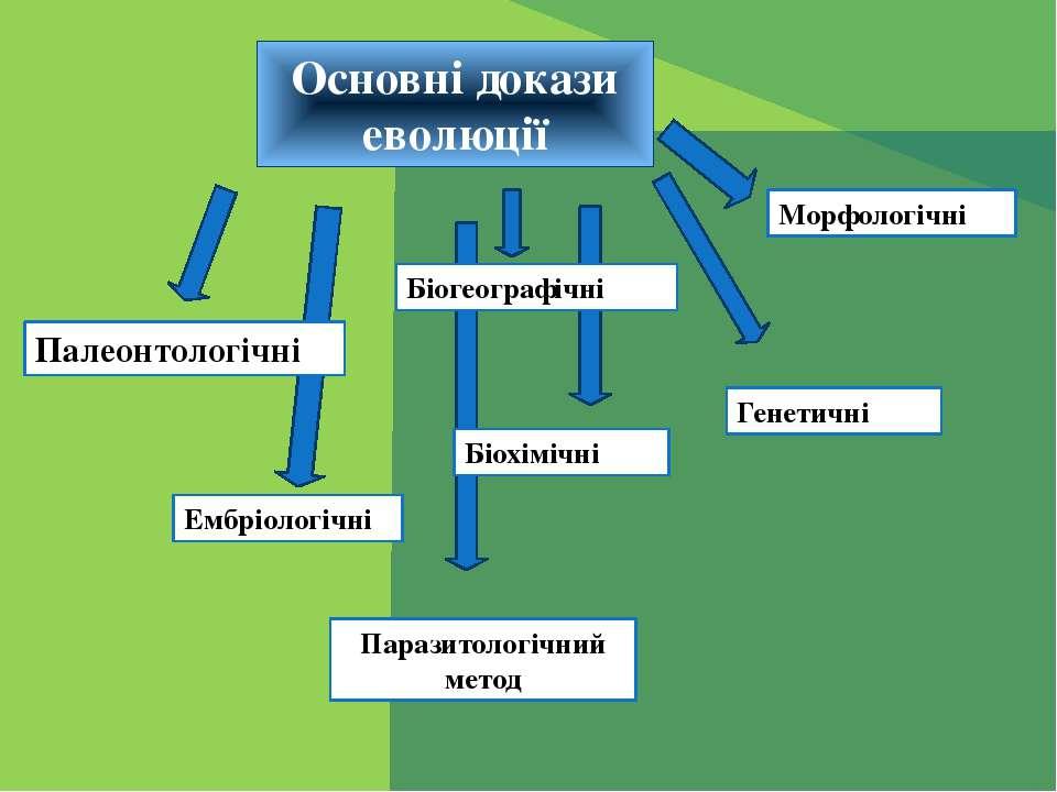 Основні докази еволюції Палеонтологічні Ембріологічні Біогеографічні Морфолог...