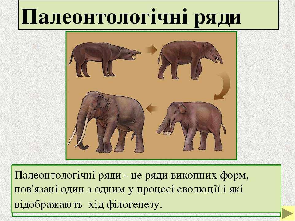 Палеонтологічні ряди Палеонтологічні ряди - це ряди викопних форм, пов'язані ...