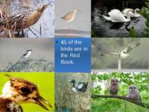 45 of the birds are in the Red Book.