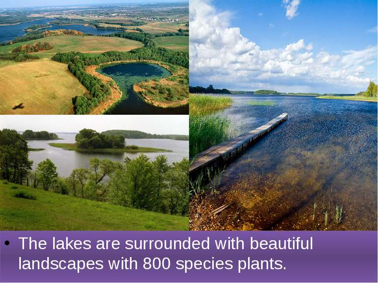 The lakes are surrounded with beautiful landscapes with 800 species plants.