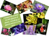 Containing around 30,000 species of plants, including 13 species extinct in t...
