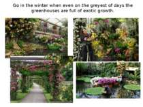 Go in the winter when even on the greyest of days the greenhouses are full of...