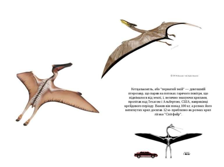 """Кетцалькоатль, або """"пернатий змій"""" — довгошиїй птерозавр, що парив на потоках..."""