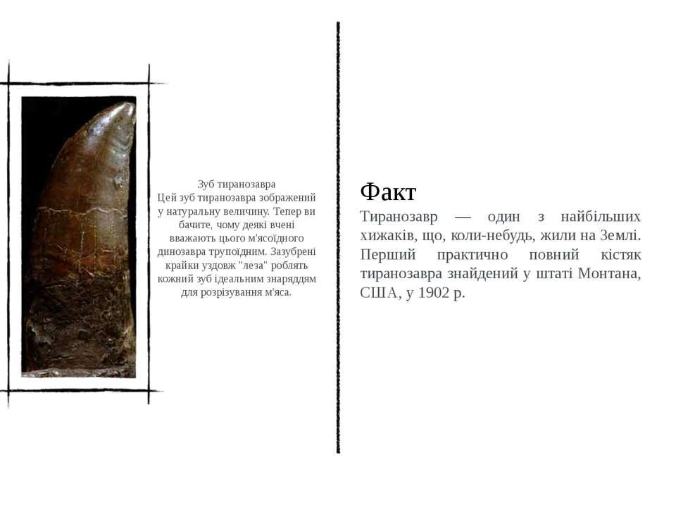 Зуб тиранозавра Цей зуб тиранозавра зображений у натуральну величину. Тепер в...