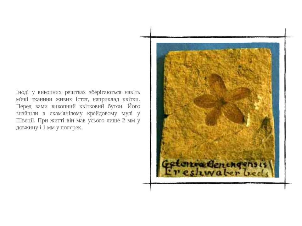Іноді у викопних рештках зберігаються навіть м'які тканини живих істот, напри...