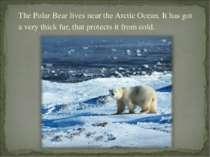 The Polar Bear lives near the Arctic Ocean. It has got a very thick fur, that...