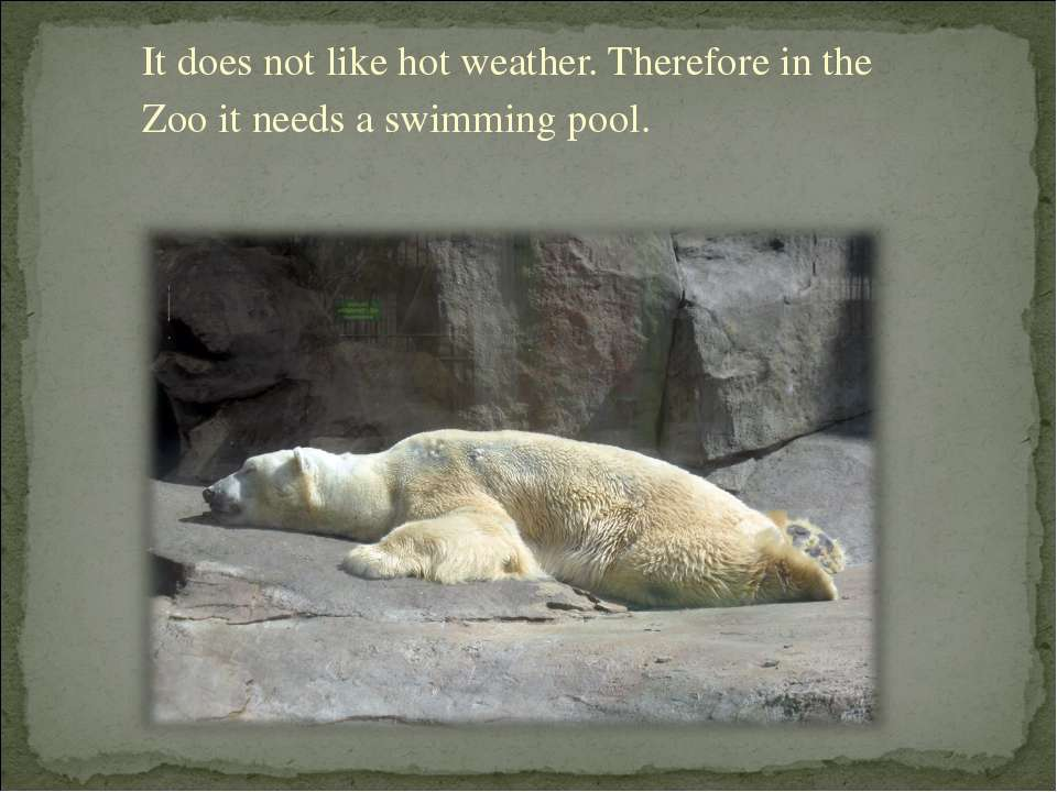It does not like hot weather. Therefore in the Zoo it needs a swimming pool.