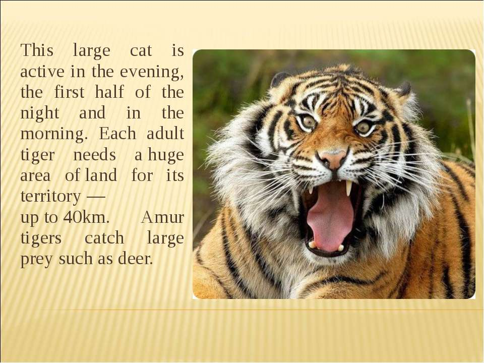 This large cat is active in the evening, the first half of the night and in t...