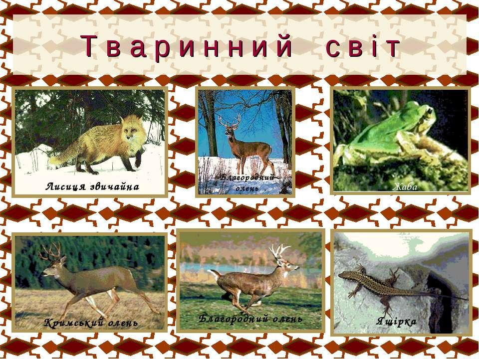 Т в а р и н н и й с в і т Лисиця звичайна Благородний олень Жаба Кримський ол...