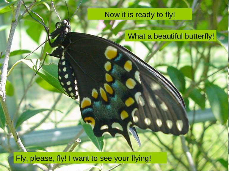 Fly, please, fly! I want to see your flying! Now it is ready to fly! What a b...