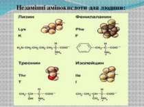 Незамінні амінокислоти для людини:
