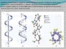 Довжина поліпептидного ланцюга в різних білків неоднакова. Різниться також ск...