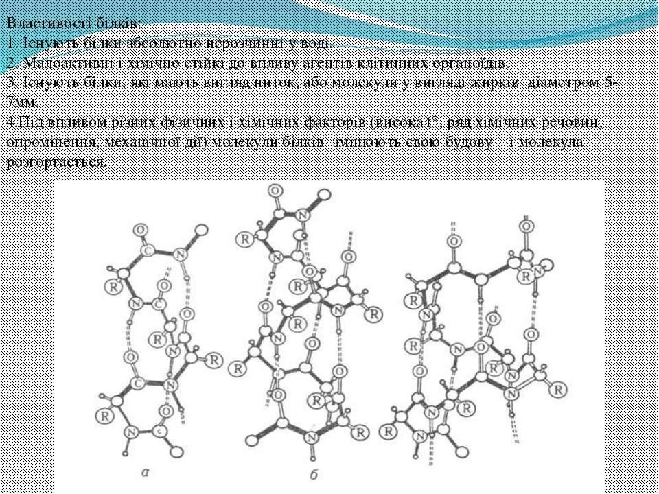 Властивості білків: 1. Існують білки абсолютно нерозчинні у воді. 2. Малоакти...