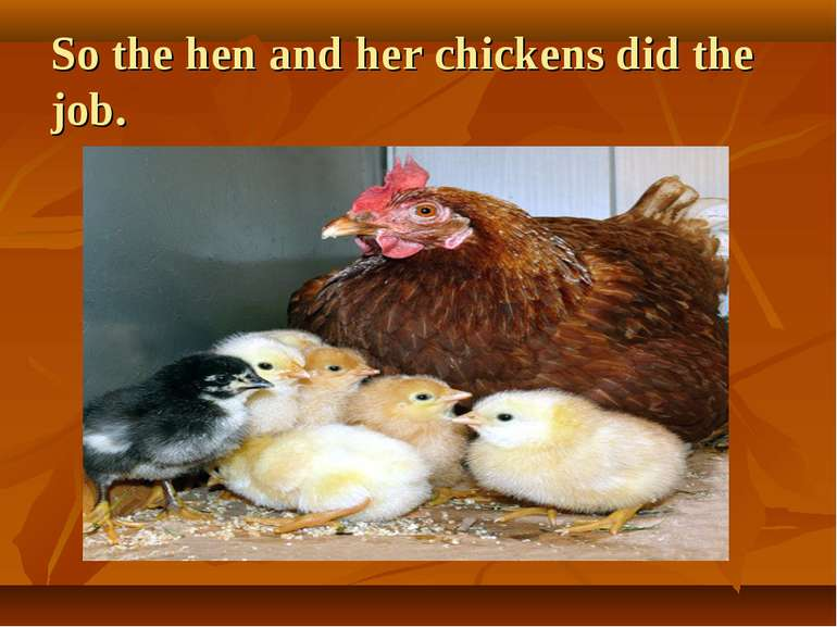 So the hen and her chickens did the job.